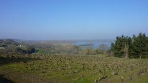 la Loire vue de Saint-Aubin