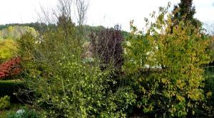 l'automne vu de ma chapelle !