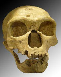 Notre cher cousin Néandertal