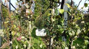 Jardin fruitier ... du Luxembourg -Paris