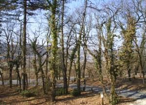 Le bois de Lascaux